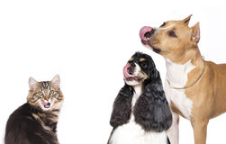 Dogs   and cats Royalty Free Stock Image