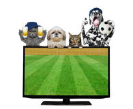 Dogs and cats with ball and beer fan football championship. Isolated on white royalty free stock photo