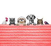 Dogs, cats, chicken and cock look through a fence Royalty Free Stock Image