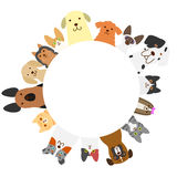 Dogs and cats circle Stock Image