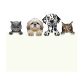 Dogs and cats holding a frame in their paws. Isolated on white background Royalty Free Stock Images