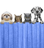 Dogs and cats look through a fence. Isolated Stock Photo