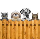 Dogs and cats look through a fence. Isolated Royalty Free Stock Image