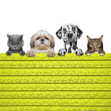 Dogs and cats look through a fence Stock Photos