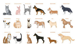 Dogs and cats set. Pets breed on white background royalty free illustration