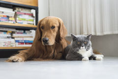 Dogs and cats snuggle together Stock Image