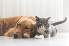 Dogs and cats snuggle together Stock Photography