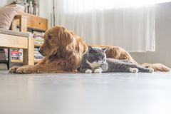 Dogs and cats snuggle together Royalty Free Stock Photos