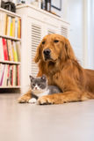 Dogs and cats. Taken indoors Royalty Free Stock Photo