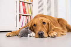 Dogs and cats royalty free stock images