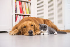 Dogs and cats stock photography