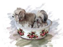 Dogs in a ceramic basin, decorated with roses. Two dogs sitting in a ceramic basin, decorated with roses, on a white background Royalty Free Stock Images