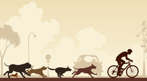 Dogs chasing cyclist Stock Image