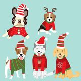Dogs in Christmas sweater celebret for winter greeting season.il. Lustration.EPS10 Royalty Free Stock Photography