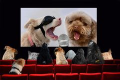Dogs in cinema  looking a music movie. Theatre auditorium cinema with red seats. A lot of different dogs are looking a music film Stock Photos