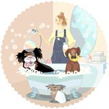 Dogs cleaner. Girl, dogs cleaner, washing couple of dog, vector illustration