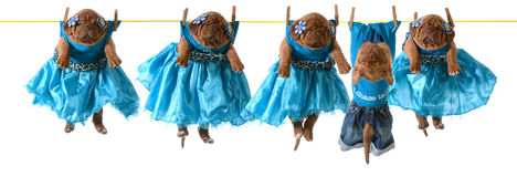 Dogs on a clothesline Stock Image