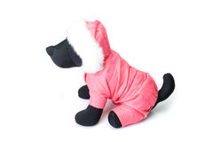 Dogs clothing Royalty Free Stock Image