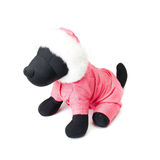 Dogs clothing Royalty Free Stock Photos