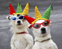 Dogs clowning around