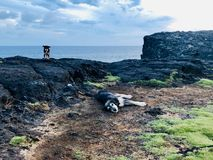 Dogs at coast of mauritius island natural bridge stock photos