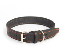 Dogs collar Royalty Free Stock Photo