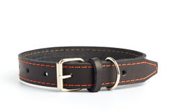Dogs collar Stock Photo