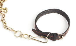 Dogs collar Stock Photos