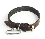 Dogs collar Stock Images