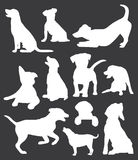 Dogs collection Stock Photos