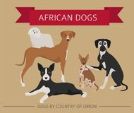 Dogs by country of origin. African dog breeds. Infographic templ. Ate. Vector illustration Stock Photo