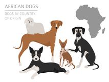 Dogs by country of origin. African dog breeds. Infographic templ. Ate. Vector illustration Royalty Free Stock Image