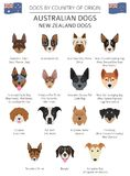 Dogs by country of origin. Australian dog breeds, New Zealand do. Gs. Infographic template. Vector illustration Stock Image