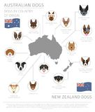 Dogs by country of origin. Australian dog breeds, New Zealand do. Gs. Infographic template. Vector illustration Royalty Free Stock Image