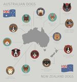 Dogs by country of origin. Australian dog breeds, New Zealand do. Gs. Infographic template. Vector illustration Royalty Free Stock Photos