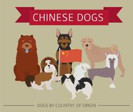 Dogs by country of origin. Chinese dog breeds. Infographic templ. Ate. Vector illustration Royalty Free Stock Images