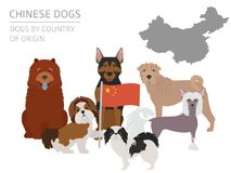 Dogs by country of origin. Chinese dog breeds. Infographic templ. Ate. Vector illustration Stock Images