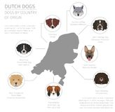 Dogs by country of origin. Dutch Holland dog breeds. Infograph Royalty Free Stock Photos