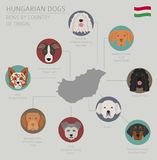 Dogs by country of origin. Hungarian dog breeds. Infographic template. Vector illustration royalty free illustration