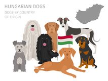 Dogs by country of origin. Hungarian dog breeds. Infographic template. Vector illustration vector illustration