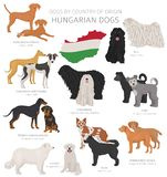 Dogs by country of origin. Hungarian dog breeds. Shepherds, hunting, herding, toy, working and service dogs  set. Vector illustration royalty free illustration