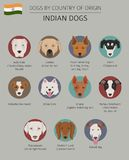 Dogs by country of origin. Indian dog breeds. Infographic templa. Te. Vector illustration Royalty Free Stock Photography