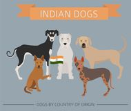 Dogs by country of origin. Indian dog breeds. Infographic templa. Te. Vector illustration Royalty Free Stock Images
