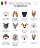 Dogs by country of origin. Italian dog breeds. Infographic templ. Ate. Vector illustration Stock Photo