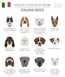 Dogs by country of origin. Italian dog breeds. Infographic templ. Ate. Vector illustration Stock Photos