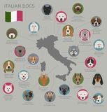Dogs by country of origin. Italian dog breeds. Infographic templ. Ate. Vector illustration Royalty Free Stock Photography
