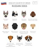 Dogs by country of origin. Russian dog breeds. Infographic templ. Ate. Vector illustration Royalty Free Stock Photos