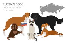 Dogs by country of origin. Russian dog breeds. Infographic templ. Ate. Vector illustration Stock Image
