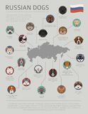 Dogs by country of origin. Russian dog breeds. Infographic templ. Ate. Vector illustration Royalty Free Stock Photo