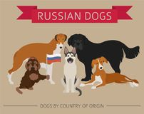 Dogs by country of origin. Russian dog breeds. Infographic templ. Ate. Vector illustration Stock Photos